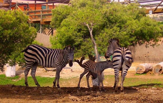 ¡Disfruta de Terra Natura en familia!