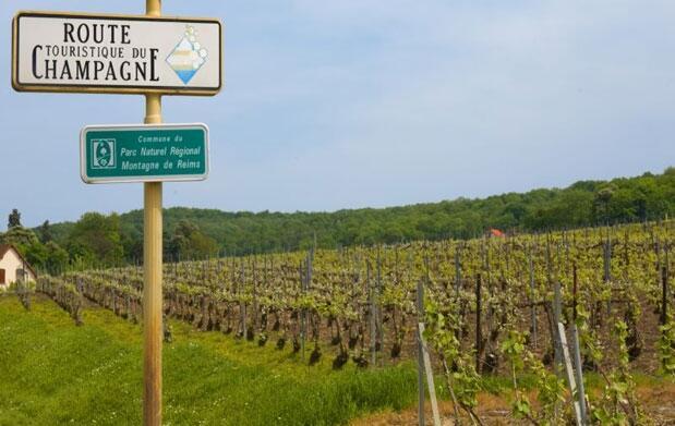 Taller MG: Un viaje a través de la Champaña