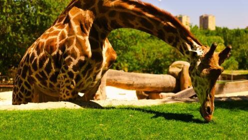 Madrid: Hotel 3*+Zoo+Parque Atracciones
