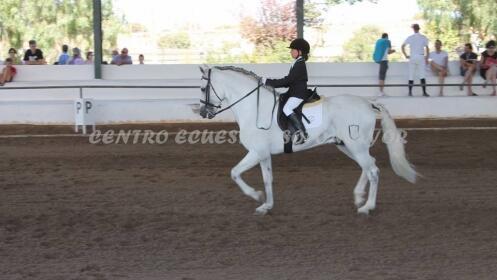 Iniciación a la equitación. 2 clases en Santa Ana