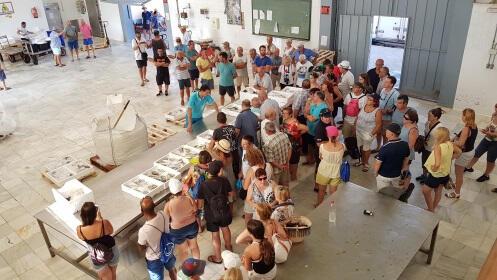 Mar Menor: jornada con los pescadores