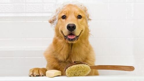 Peluquería canina: Baño completo